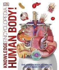 Online Human Body Knowledge Encyclopedia Human Body Dk Hardcover Books Online