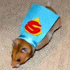halloween costume with cape halloween dog costume ideas 32 easy cute costumes for your