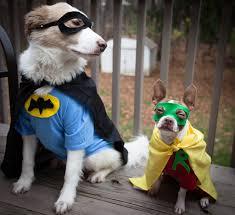 Batman Robin Dog Halloween Costumes U0027s Photos Batdog Halloween Flickr Hive Mind