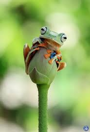 best 25 funny frog pictures ideas on pinterest animated frog
