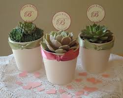 plant wedding favors reserved for melefterion 220 succulent plant wedding favors