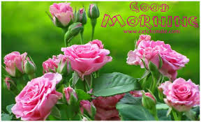 morning wishes with flowers pictures images page 65