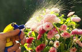How To Keep Pests Away From Garden - 7 easy diy recipes for deterring garden pests diseases and