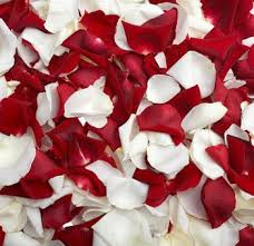 where can i buy petals 20 best petals images on flower petals fresh