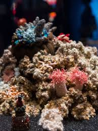 this man made coral reef may be the most incredible thing you see crochet coral reef toxic seas is on view at the museum of art and design until january 22 2017 for more information on the exhibition