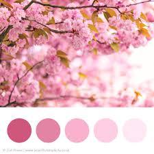Pink Colour by Colour Palette Inspiration U2014 Beautiful Simplicity