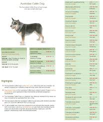 australian shepherd growth chart australian cattle dog http dogtime com dog breeds australian