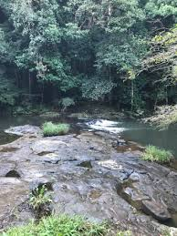 Gardeners Falls Maleny - gardners falls maleny top tips before you go with photos