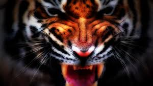 tiger hd wallpapers u2013 page 4 u2013 hd wallpapers images pictures