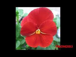 imagenes flores bellisimas las flores mas bellas del mundo imagenes recopilacion las flores