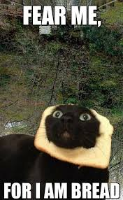 Cat In Bread Meme - 15 purrsome cat breeds that behave like dogs the catdogs meme
