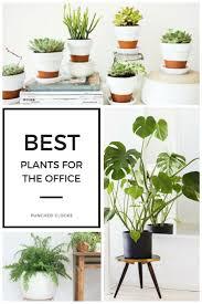 42 best office plant goals images on pinterest inside plants