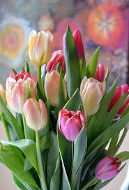 Pretty Types Of Flowers - best 20 tulip ideas on pinterest purple tulips pink tulips and