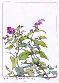 butterfly bush creative color