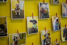 hotdog pet salon