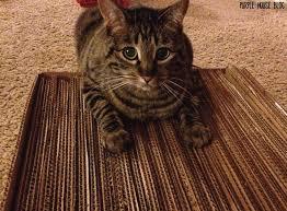 Cat Scratchers Cardboard Diy Cat Scratcher Purple House Blog