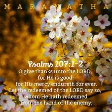 salmos 22 28 versículos y citas diarias