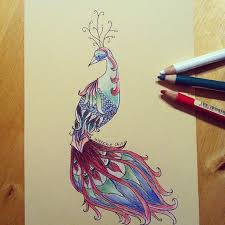 drawn peacock love bird pencil and in color drawn peacock love bird