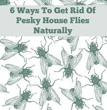 How To Get Rid Of Flies In The Backyard by Essential Oil Room Spray To Get Rid Of Pesky House Flies Naturally