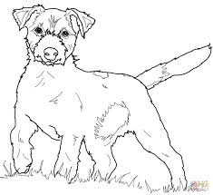 jack russell terrier coloring page free printable coloring pages