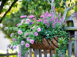 Flowers For Window Boxes Partial Shade - 24 best perennials images on pinterest garden care garden ideas