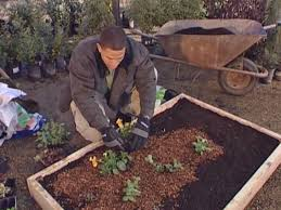 tips for planting a raised bed diy