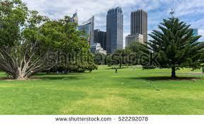 Botanical Garden Sydney by Botanic Gardens Sydney Stock Images Royalty Free Images U0026 Vectors