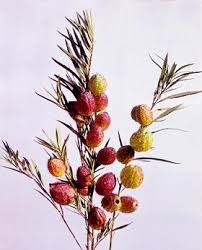 Dried Flower Arrangements Seeds For Unusual Dry Flower Arrangement Plants