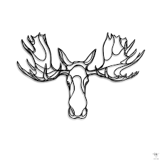 drawn moose face pencil and in color drawn moose face