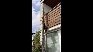 katzenleiter balkon katzenleiter cattrip in will ins freie
