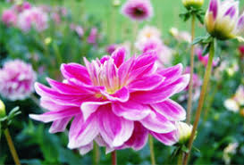 5 best flowers to grow for home bouquets