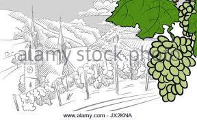 farm sketch rural landscape with vineyard vector illustration
