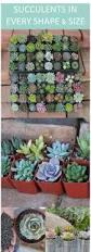 185 best gardening ideas images on pinterest garden projects
