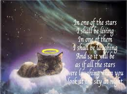 coping with loss of pet how to cope with losing a pet ingrid king