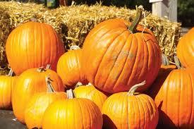 fall pumpkin wallpapers images of celebrate autumn fall pumpkin sc