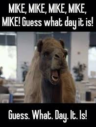Hump Day Camel Meme - hump dayyyyy w00 hoo everyone says it love this commercial