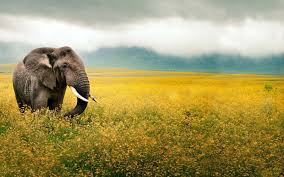 elephant and baby elephant hd wallpaper only hd wallpapers