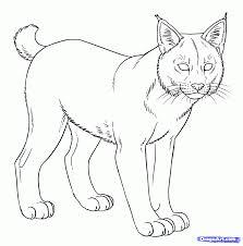 drawn pice bobcat pencil and in color drawn pice bobcat