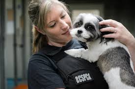 bc spca the b c society for the prevention of cruelty to animals