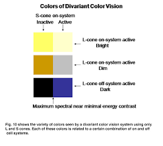 Cause Of Colour Blindness Color Vision By Peter Gouras U2013 Webvision