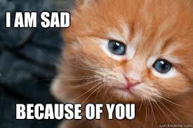 Sad Cat Memes - i am sad cat memes quickmeme