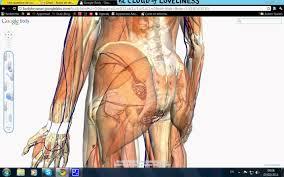 Google Body Anatomy Comment Démarrer Google Body Youtube