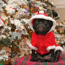 25 card pugs wish you a merry
