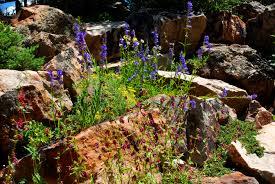photo gallery u2013 betty ford alpine gardens