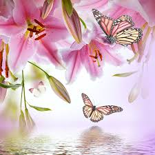 shop multi colored lilies and butterfly wallpaper in wildlife theme