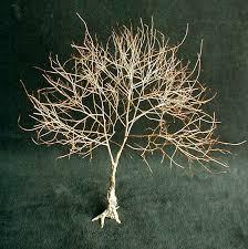 twig tree with lights living tree art earl senchuk