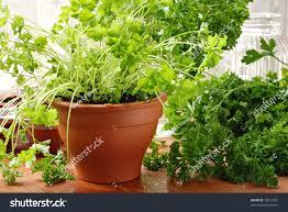 garden design garden design with easytogrow herbs for a simple
