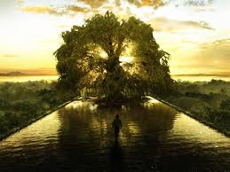 the tree of represents the spiritual point of balance the