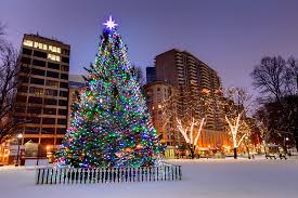 scotia selects annual tree to send to boston