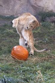 happy halloween from zooborns zooborns